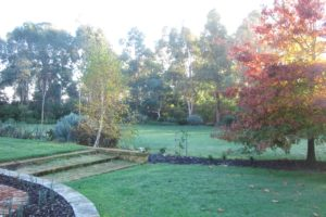 Autumn trees and lawn